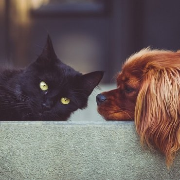 Dog and Cat Odours