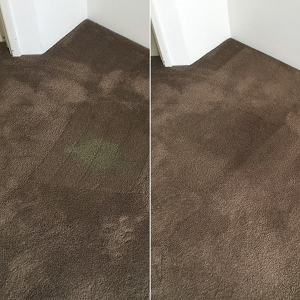 Carpet Bleach Repair